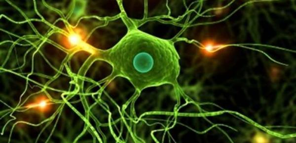Saiba mais sobre o curso Introdução à Biologia Celular