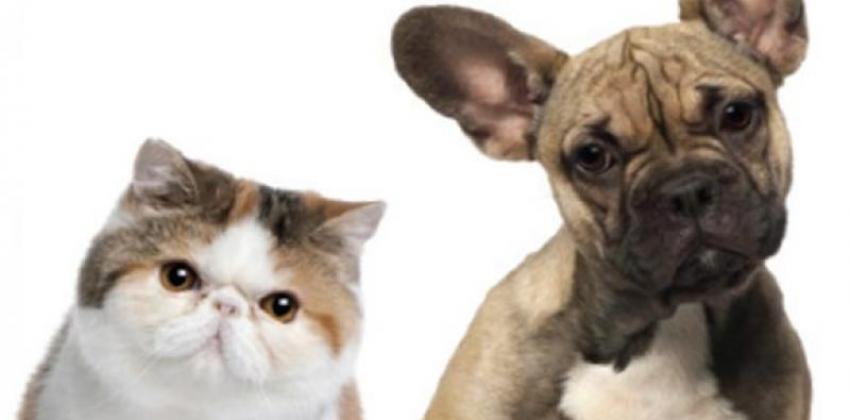 Primeiros Socorros (Cães e Gatos)