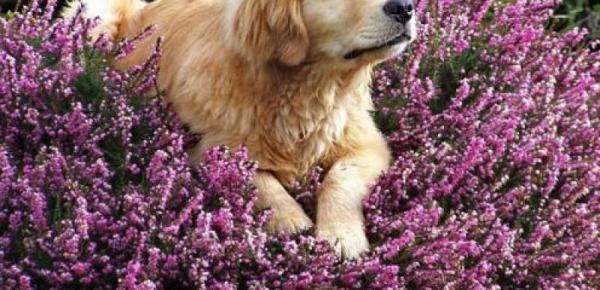 Saiba mais sobre o curso Terapias Naturais em Animais